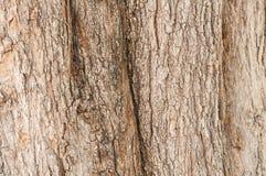 Textura da casca de árvore Fundo da madeira da natureza Imagens de Stock Royalty Free