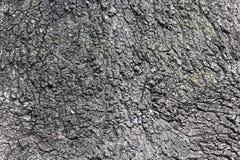 Textura da casca de árvore Fundo natural Fotos de Stock