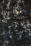 Textura da casca de árvore para o fundo Imagem de Stock