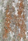 Textura da casca de árvore plana Imagem de Stock Royalty Free