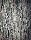 Textura da casca de carvalho Foto de Stock