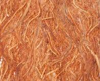 Textura da casca de Gugo Imagens de Stock
