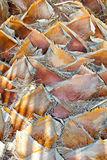 Textura da casca de palmeira Fotografia de Stock Royalty Free