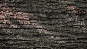 Textura da casca de ?rvore Fundo de Brown Ind?stria de madeira fotos de stock