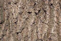 Textura da casca de ?rvore imagem de stock