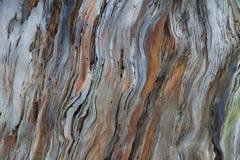 Textura da casca de uma árvore Foto de Stock Royalty Free