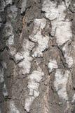 Textura da casca de vidoeiro Fundo natural: casca de vidoeiro, uso para ilustrações, testes padrões decorativos, matéria têxtil foto de stock
