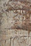 Textura da casca do coco Imagens de Stock