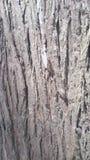 Textura da casca do tronco de árvore que olhares como uma rocha imagem de stock