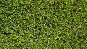 Textura da cerca verde filme
