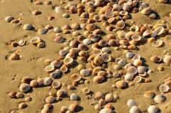 Textura da costa de mar Imagem de Stock Royalty Free