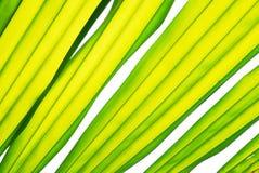 Textura da folha Fotografia de Stock
