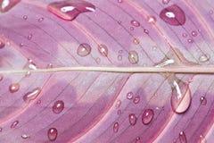 Textura da folha Imagem de Stock Royalty Free