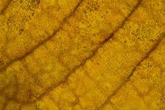 Textura da folha Foto de Stock