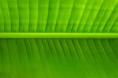 Textura da folha da banana fotografia de stock
