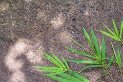 Textura da folha de bambu Foto de Stock