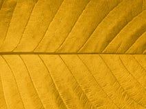Textura da folha do outono Foto de Stock