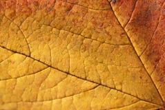 Textura da folha do outono Imagens de Stock