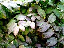 Textura da folha no teste padrão natural, assoalho de pedra Decorativo, cinzento foto de stock