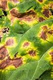 a textura da folha nos pontos Fotografia de Stock