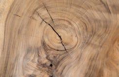 Textura da folhosa da árvore marrom Pode ser usado como o fundo Foto de Stock