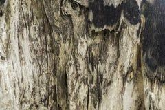 Textura da fotografia da árvore Imagens de Stock