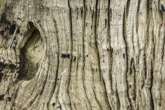 Textura da fotografia da árvore Foto de Stock