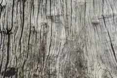 Textura da fotografia da árvore Imagens de Stock Royalty Free