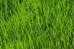 Textura da grama Foto de Stock Royalty Free