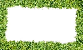 Textura da grama Foto de Stock