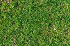 Textura da grama Imagem de Stock Royalty Free