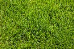 Textura da grama Fotografia de Stock