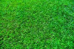 Textura da grama Fotos de Stock