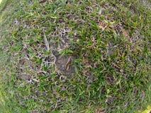 Textura da grama Imagem de Stock