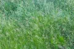 Textura da grama Imagens de Stock Royalty Free