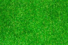 Textura da grama da natureza Fotos de Stock Royalty Free
