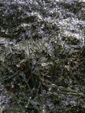 Textura da grama de Frost fotografia de stock