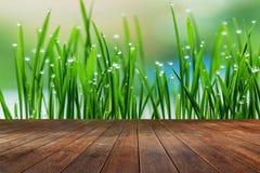 Textura da grama de superfície e verde da madeira Fotos de Stock Royalty Free