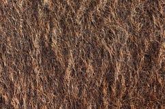 A textura da grama do estuário do mar foto de stock