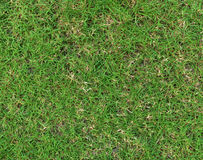 Textura da grama Fundo da grama seamless Fotografia de Stock Royalty Free