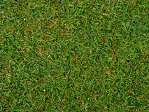 A textura da grama no campo verde do golfe Fotografia de Stock
