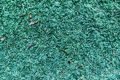 Textura da grama no parque na luz do dia Close-up fotografia de stock royalty free
