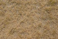 Textura da grama seca Imagem de Stock Royalty Free