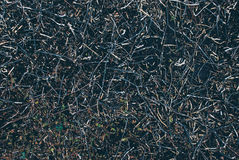 Textura da grama seca Imagens de Stock