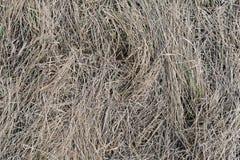 Textura da grama seca Imagens de Stock Royalty Free