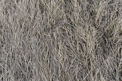 Textura da grama seca Fotografia de Stock Royalty Free