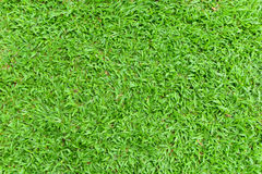 Textura da grama verde foto de stock