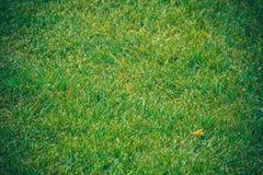 Textura da grama verde Imagem de Stock