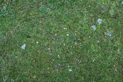 Textura da grama verde com rochas pequenas fotografia de stock royalty free