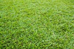 Textura da grama verde de um campo. Foto de Stock